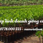 Giấy phép kinh doanh giống cây trồng
